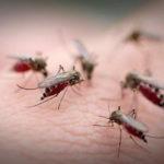Tâm sự của người phụ nữ 2 lần mắc bệnh sốt xuất huyết thập tử nhất sinh