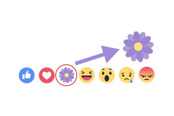 Bông hoa tím Facebook
