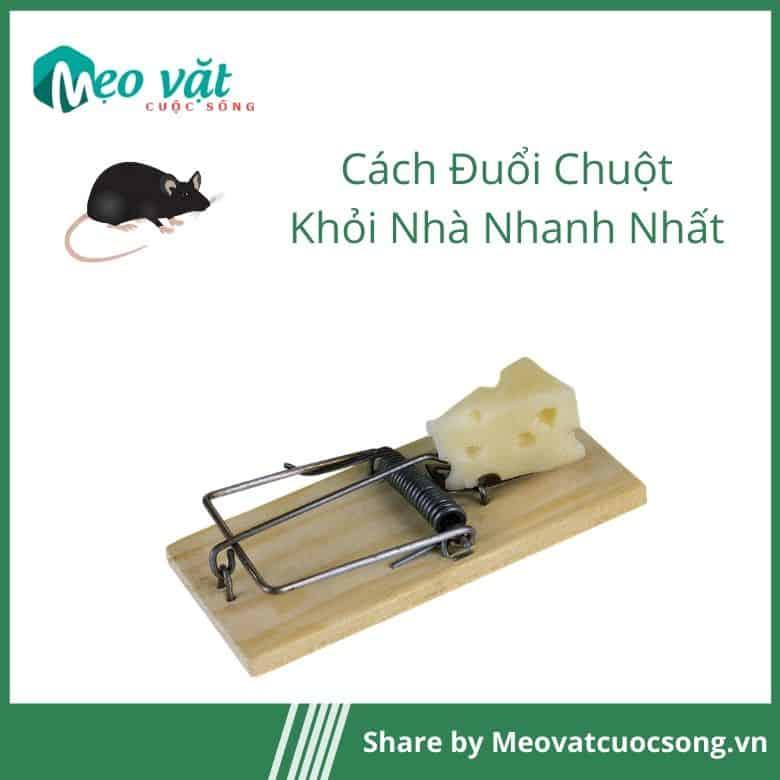 Đuổi chuột khỏi nhà bằng bẫy chuột