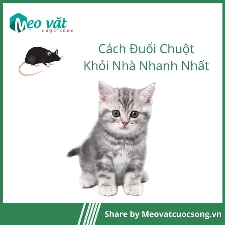 Đuổi chuột khỏi nhà bằng mèo