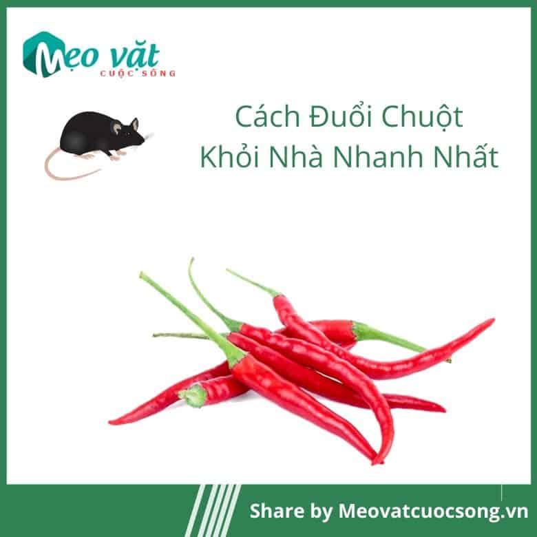 Đuổi chuột khỏi nhà bằng ớt